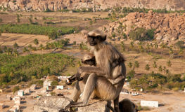 Monkey with a cub overlooking boulder landscape Stock Photography