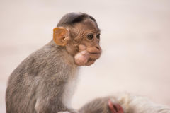 Monkey. Cut child Royalty Free Stock Photography