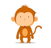 Monkey so cute Royalty Free Stock Photo