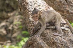 Monkey. Cute on tree Stock Photography