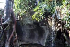 Monkey dans le zoo se tenant sur un arbre et regardant dans l'appareil-photo Appareil-photo Singe drôle photos stock