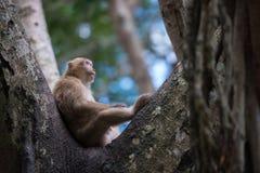 Monkey das Sitzen auf dem Baum Lizenzfreies Stockbild