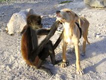 Monkey and dog good friends stock image
