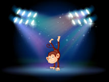 A monkey doing a handstand in the middle of the stage Stock Photography
