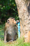 Monkey drinking clean water from tube for lovely and animals in Stock Photos