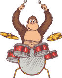Monkey and Drums Royalty Free Stock Images