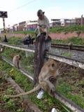 Monkey Stock Photos
