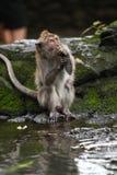 Monkey eating Stock Image