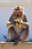 Monkey eating banana. In thailand stock photo