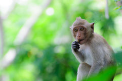 Monkey eating a banana. On the tree stock image