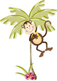 Monkey eating banana in palm tree Royalty Free Stock Image