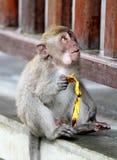 Monkey 030 Royalty Free Stock Image