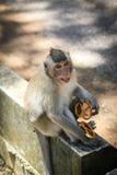 Monkey eating crackers Stock Photos