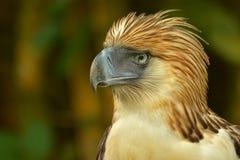 Monkey eating eagle. Close up shot of monkey eating eagle Royalty Free Stock Photo