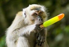 Monkey eating ice cream Stock Photos
