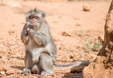 Monkey. Stock Images