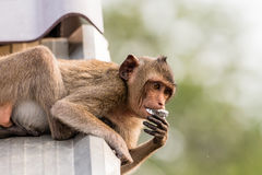 Monkey eating on the roof Royalty Free Stock Images