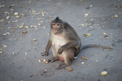 Monkey. A monkey is eating something Stock Photo