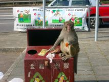 Monkey Eating from the Trash Royalty Free Stock Photos