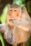 Monkey eats. close-up. Summer light stock image