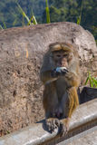 Monkey. Eats the egg, Sri Lanka Stock Photos