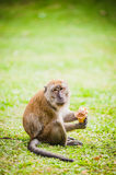 Monkey Eats Ice Cream Stock Photo