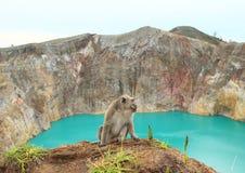 Monkey on edge of crater with lake Tin on Kelimutu royalty free stock photos