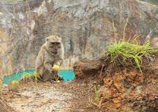 Monkey on edge of lake Tin on Kelimutu eating fruit Royalty Free Stock Images
