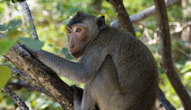 Monkey el modelado Imagen de archivo