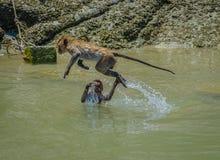 Monkey el salto del agua en la piscina Hua Hin Thailand de la roca Imagenes de archivo