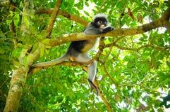 Monkey en el árbol Fotografía de archivo libre de regalías