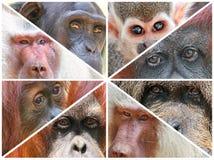 Monkey eyes. Natural world look. Set of a various photo royalty free stock photos