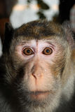 Monkey face. Monkey sitting in cage looking royalty free stock images