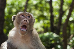 Monkey a face imagens de stock royalty free