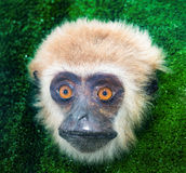 Monkey face, the mammal primate in exhibition Stock Image