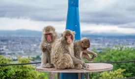 Monkey a família sobre o telescópio que joga na montanha de Arashiyama, kyoto Imagens de Stock Royalty Free