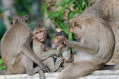 Monkey family. Stock Image