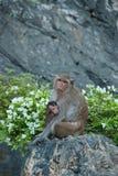 Monkey family Stock Photo