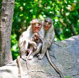 Monkey Family. Show of family bonding by monkey family Stock Images
