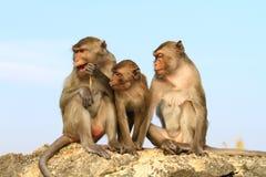 Monkey family. Asia monkey family is sitting on the chongkrajok mountain Royalty Free Stock Image