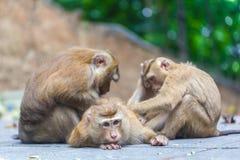 Monkey family Royalty Free Stock Photo