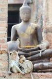 Monkey family with buddha statue background Stock Photography
