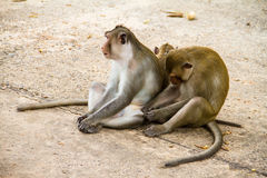 Monkey family Royalty Free Stock Photography