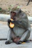 Monkey family Royalty Free Stock Image