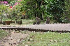 Monkey family stock image