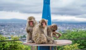 Monkey family over telescope playing in Arashiyama mountain, kyoto Royalty Free Stock Images