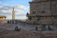 Monkey family among the ruins of ancient city, India Stock Images