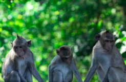 Monkey family sit in the forest. Monkey on green bokeh background of tree in national park or jungle. Family indifference royalty free stock photography