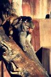 Monkey Family stock images