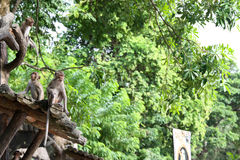 Monkey. Family,   on the tree Stock Photography
